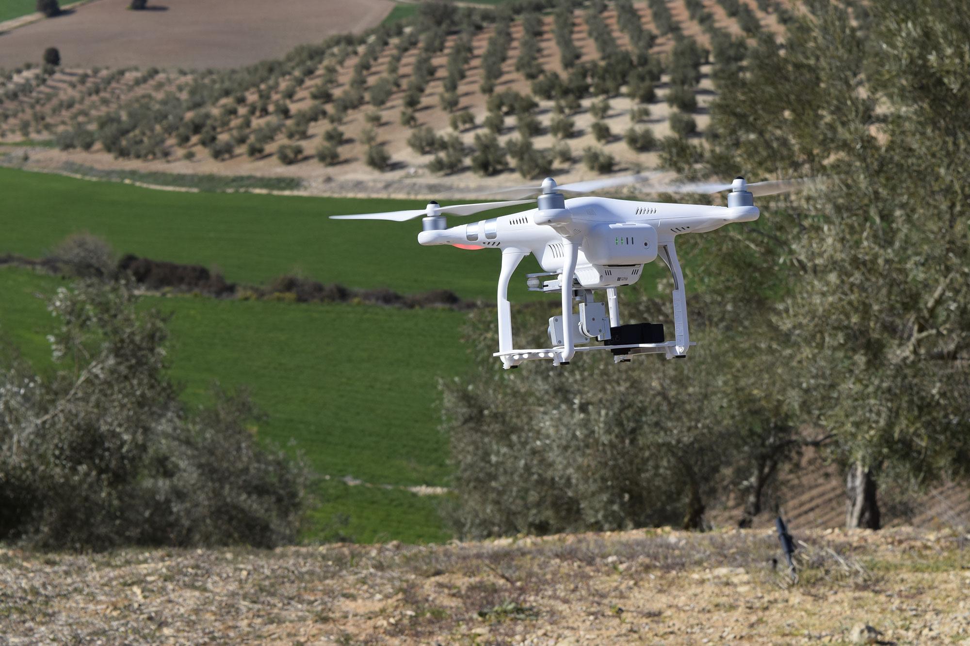 Drone y Olivar