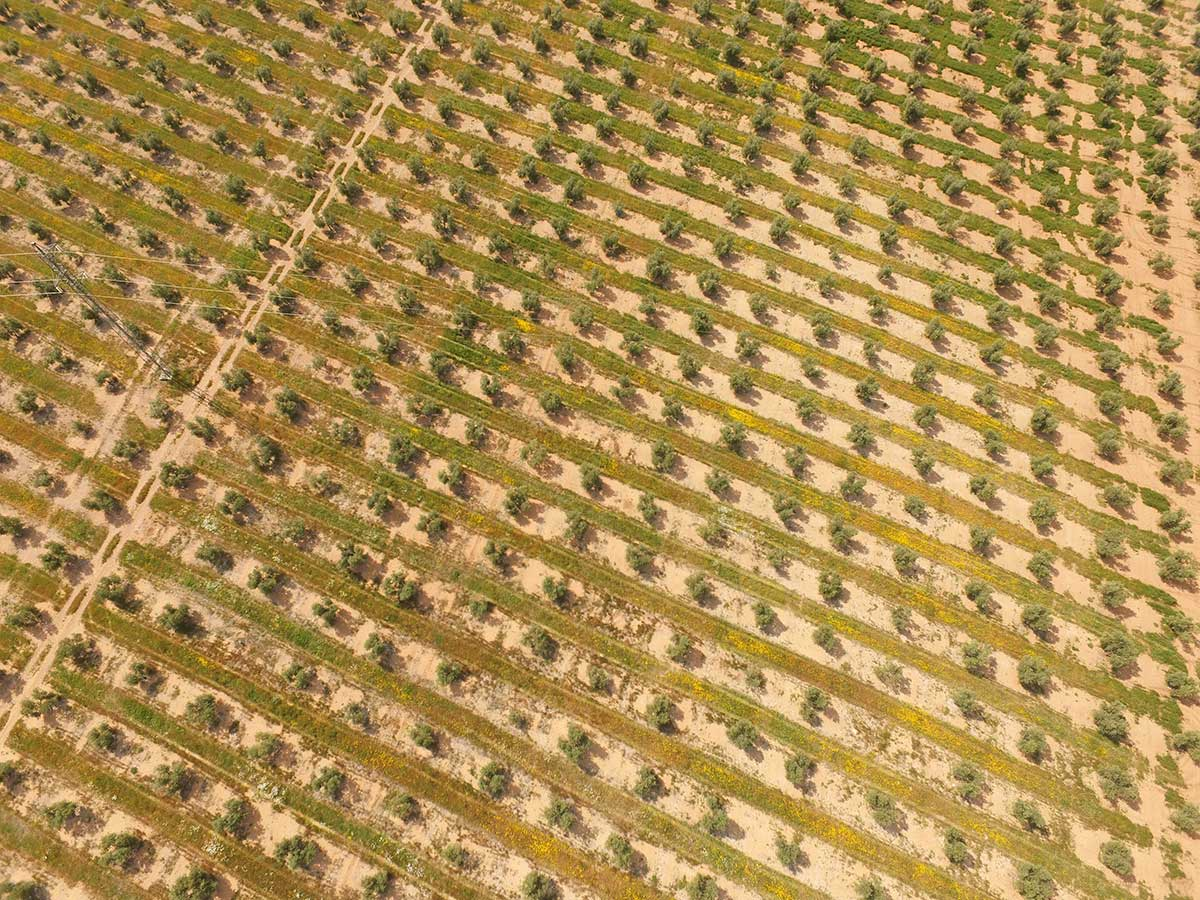 Optimización de cultivos agrícolas